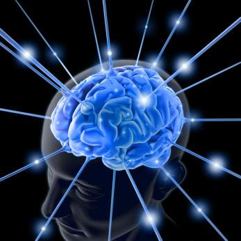 健康的大脑