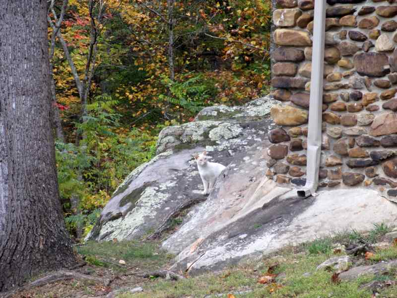 Cat on Pine Mountain , Kentucky
