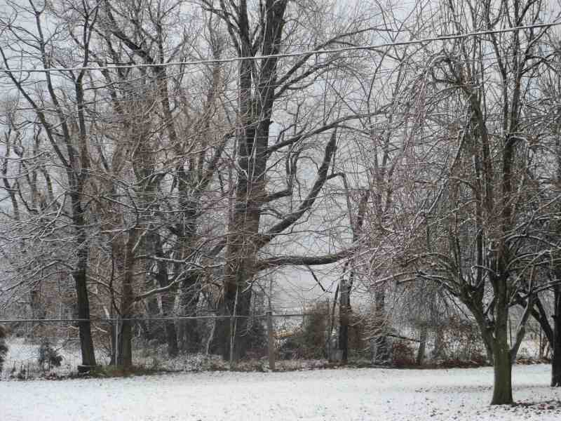 Snowy Morning Dec 2012