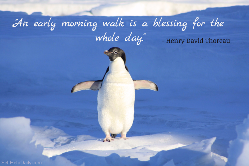 An early morning walk is a blessing for the whole day. - Henry David Thoreau