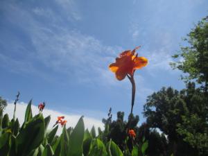 Flowers on Kentucky Dam Village Golf Course