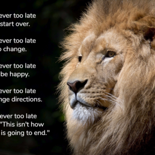 Never Too Late Quote Graphic