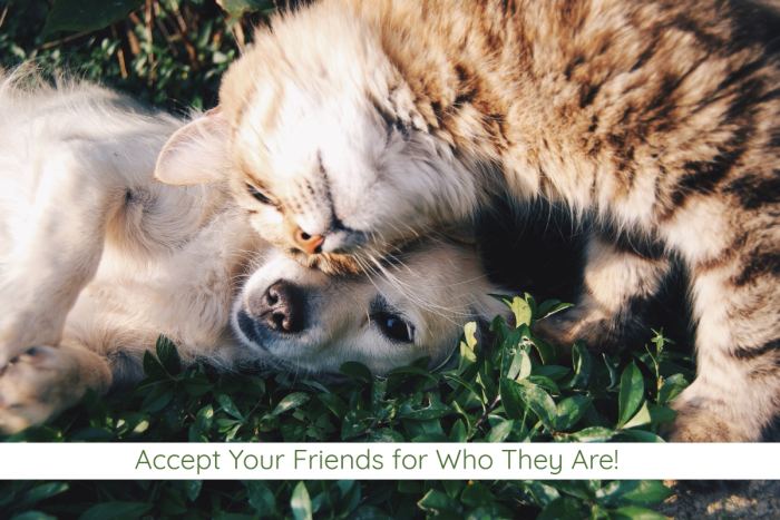 Accept Your Friends for Who They Are