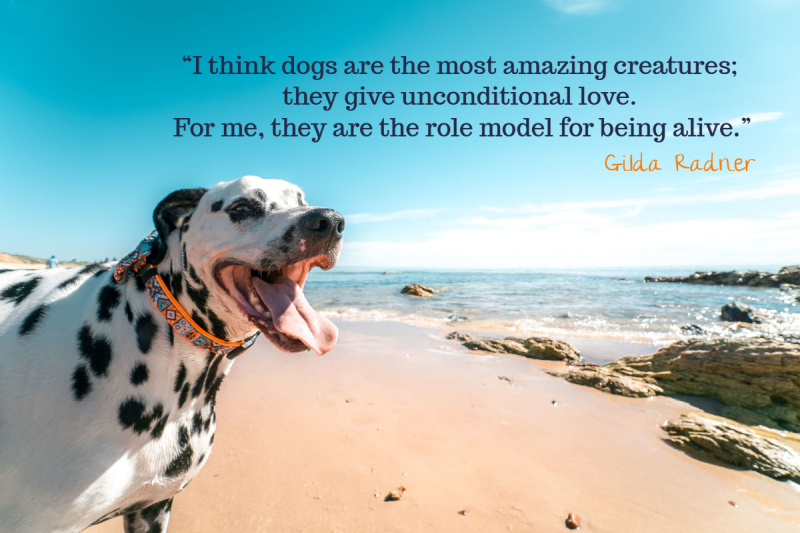 Quote About Dogs