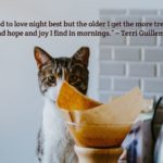 Morning Cat and Coffee