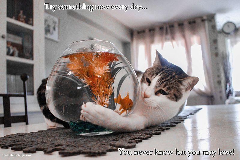 Try Something New Every Day Graphic